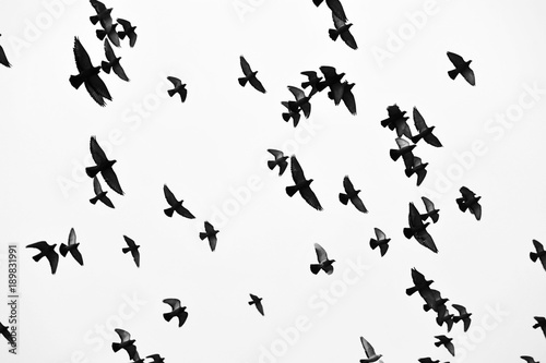 Birds in flight, freedom. Silhouette. Flock of birds. Canvas Print