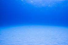 砂地の海底