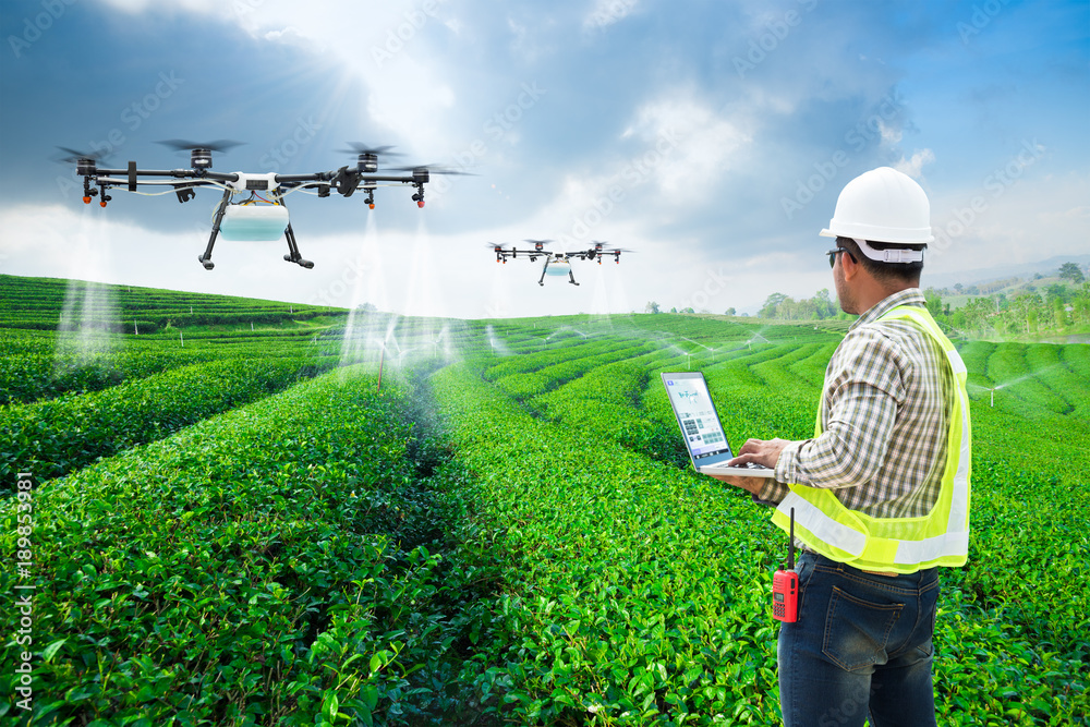 Fototapety, obrazy: Technician farmer use wifi computer control agriculture drone fly to sprayed fertilizer on the green tea fields, Smart farm 4.0 concept