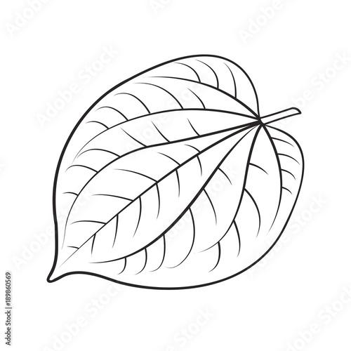 Photo black outline betel leaf vector drawing