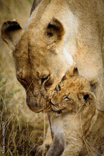 matka-i-dziecko-lwy-z-madikwe
