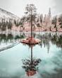 Einzelner Baum der auf einer kleinen Insel im Crestasee vor den schweizer Bergen steht und sich im blauen Wasser spiegelt