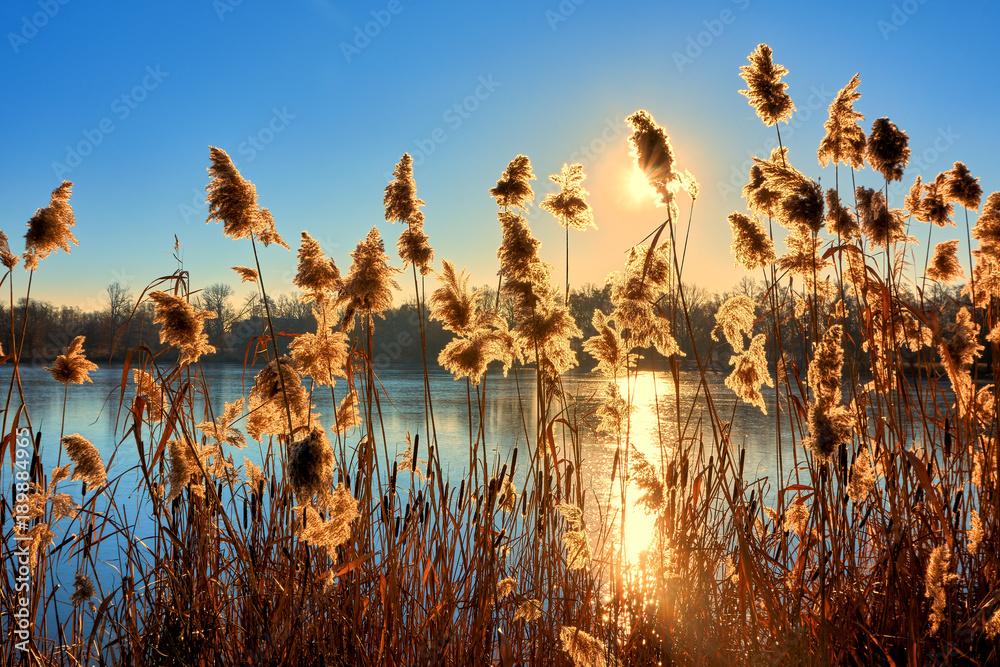Seeufer mit Schilf bei Sonnenuntergang