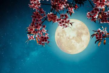Fototapeta Romantyczny Romantic night scene - Beautiful cherry blossom (sakura flowers) in night skies with full moon. - Retro style artwork with vintage color tone.