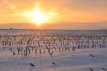 Golden Sunrise Casting Long Shadows In A Snowy Field Of Cut Corn Stalks