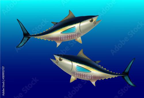 Bluefin tuna Thunnus thynnus saltwater fish underwater blue sea Wallpaper Mural
