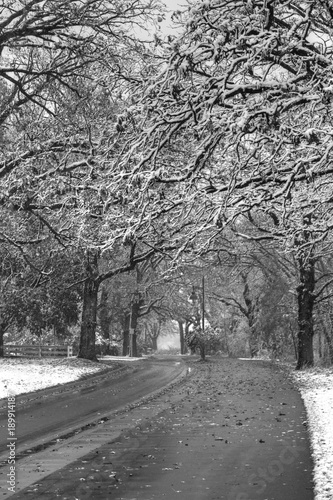 Photo  Snow Covered Trees Lining Road