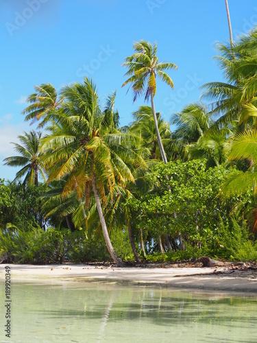 Fototapety, obrazy: ile de Fakarava, archipel des Tuamotus