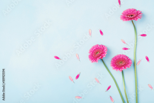 fototapeta na ścianę Beautiful spring pink flowers on blue pastel table top view. Floral border. Flat lay style.