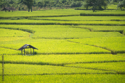 Staande foto Rijstvelden Green Terraced Rice Field in Nan, Thailand.