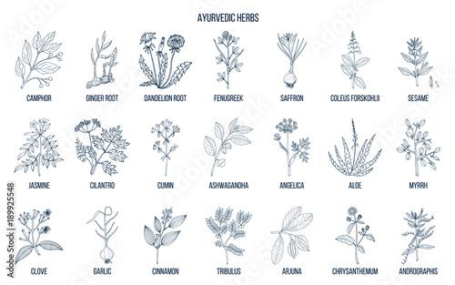 Ayurvedic herbs, natural botanical set Fototapet