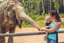 Mom And Son Feed The Elephant ...