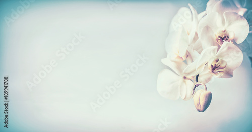 Pretty orchids flowers at blue pastel background , copy space, template or banner