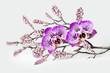 Orchideen und Dekoration