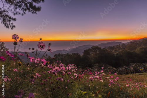 Fototapety, obrazy: Doi Mae Taman is beautiful.Camping on the mountain fog beautiful sea view.Beautiful sunset.Beautiful sunrise.Traveling mountain camping tent in Chiang Mai, Thailand.