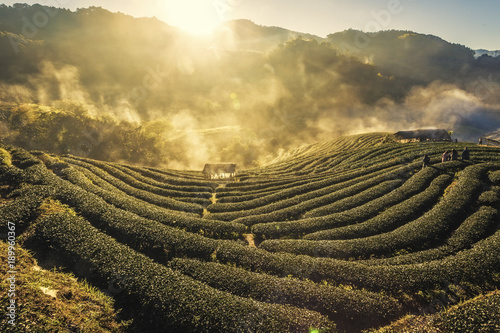 Poster Rijstvelden Beautiful Sunrise Landscape view with morning sea of fog at Tea Plantation field at doi angkang , chiang mai , Thailand.