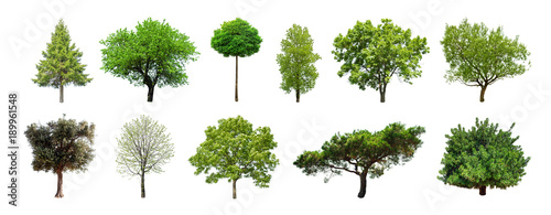 Set of green trees isolated on white background. Different kinds of tree collection