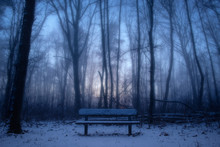 Park Bench In Misty Forest At ...