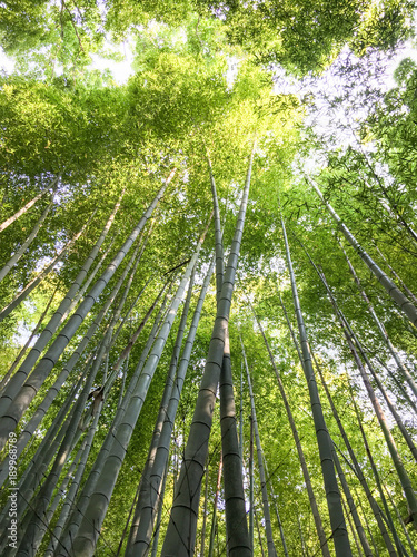 Foto op Canvas Bamboe Bamboo forest, Kyoto