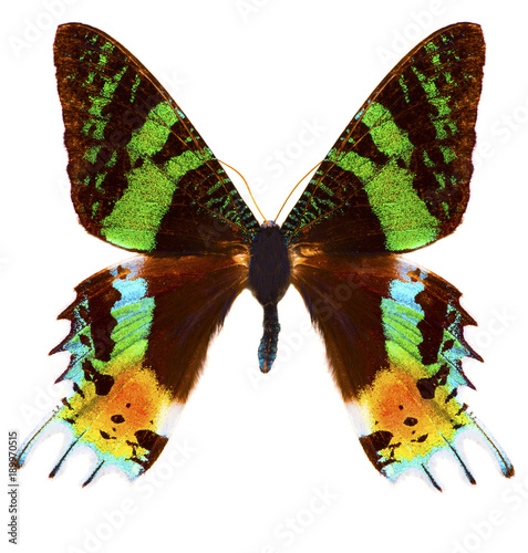 Madagascan sunset moth (Chrysiridia rhipheus) butterfly isolated