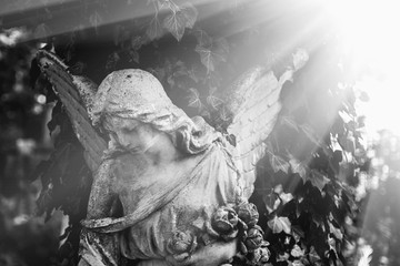 Fototapeta angel in the sunlight (antique statue)