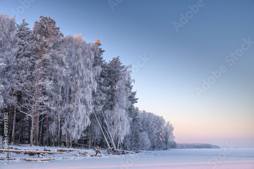 Printed kitchen splashbacks Purple The picturesque forest is covered with hoarfrost at dawn.