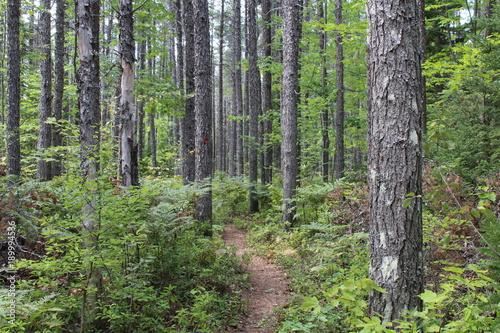 Keuken foto achterwand Olijf Randonnée pédestre en forêt
