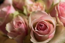 In Rosa, Creme Und Weiß Blühen Cezanne Rosen