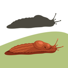Slug Snail  Cartoon Vector Il...