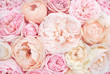 canvas print picture - Summer blossoming delicate rose on blooming flowers festive background, pastel and soft bouquet floral card