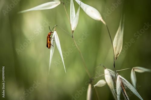 Fotografía  Pequeño insecto luchador