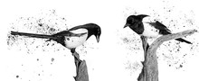 Twoo Black And White Birds And Spray Paint