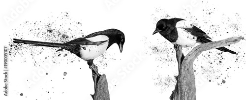 twoo black and white birds and spray paint Wallpaper Mural