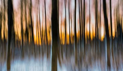 Abstrakcjonistyczny las fotografujący na długim ujawnieniu