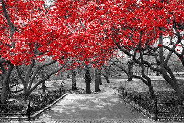 Panel Szklany Współczesny Canopy of red trees in surreal black and white landscape scene in Central Park, New York City