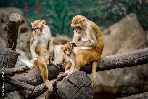 Garden Poster Parrot Monkey sitting on branch