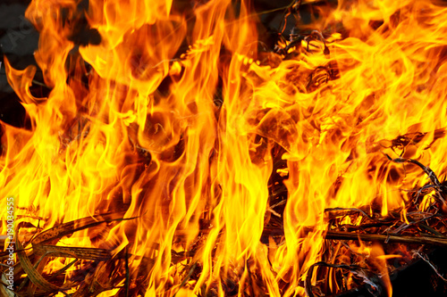 Macro shot of bonfire, white smoke, hot, glowing coal and fire. Burning branches and wood.