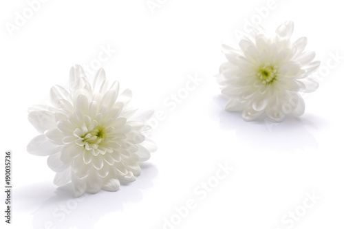 Foto Japanese white chrysanthemum flower isolated on white