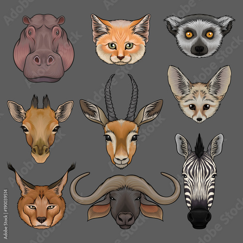 Fotografering  Head of wild animals set, portrait of hippo, lynx, fox, fenech, lemur, giraffe,