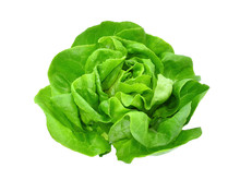 Green Butter Lettuce Vegetable...
