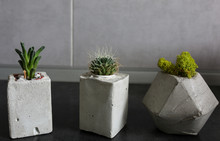 Three Tiny Succulents In Concr...