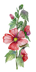 FototapetaRed malva flowers on a stem with green leaves and buds. Fresh mallows isolated on white background. Watercolor painting. Hand drawn.
