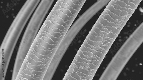 Fototapeta Menschliches Haar Mikroskopische Aufnahme 3D Illustration obraz