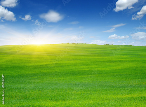Foto op Canvas Platteland Green field and sun.