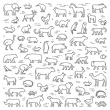 Vector Line Concept For American, African And Australian Animals