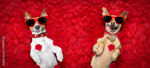 Deurstickers Crazy dog valentines couple of dogs with rose petals