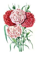Panel Szklany Botaniczne Illustration of palnt.