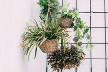 Hanging Baskets With Green Pla...