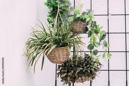 Hanging baskets with green plants