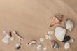 Sea shells on sand. Summer beach background with copy space. Sea shells with sand as background.